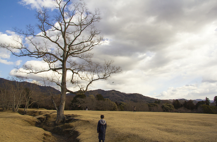 Cometas en Nara