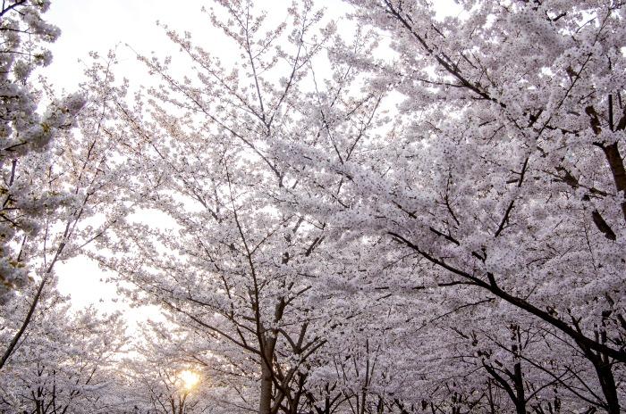 Atardecer en Sakuranomiya