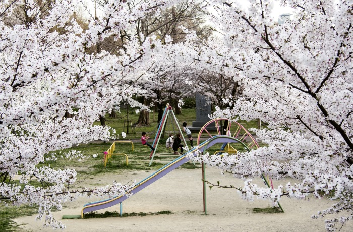 Parque cerca de Sakuranomiya