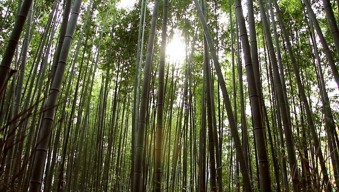 Arashiyama bambú