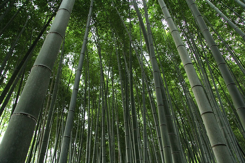 7 dias kyoto parte 2 blog