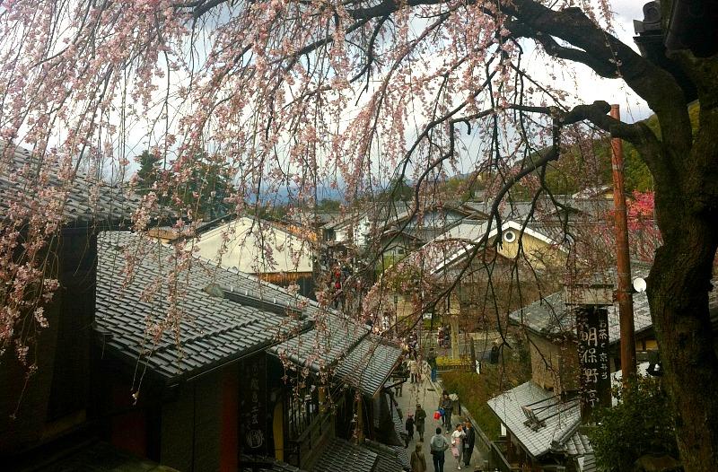 sakura-kyoto